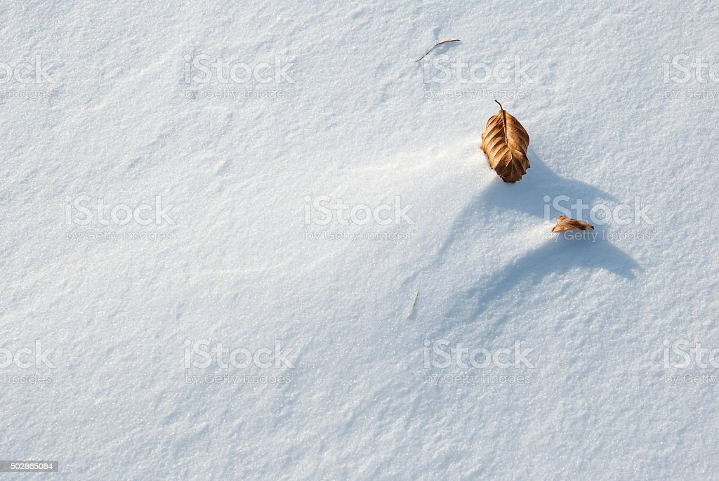 Dry leaf on snow background stock photo