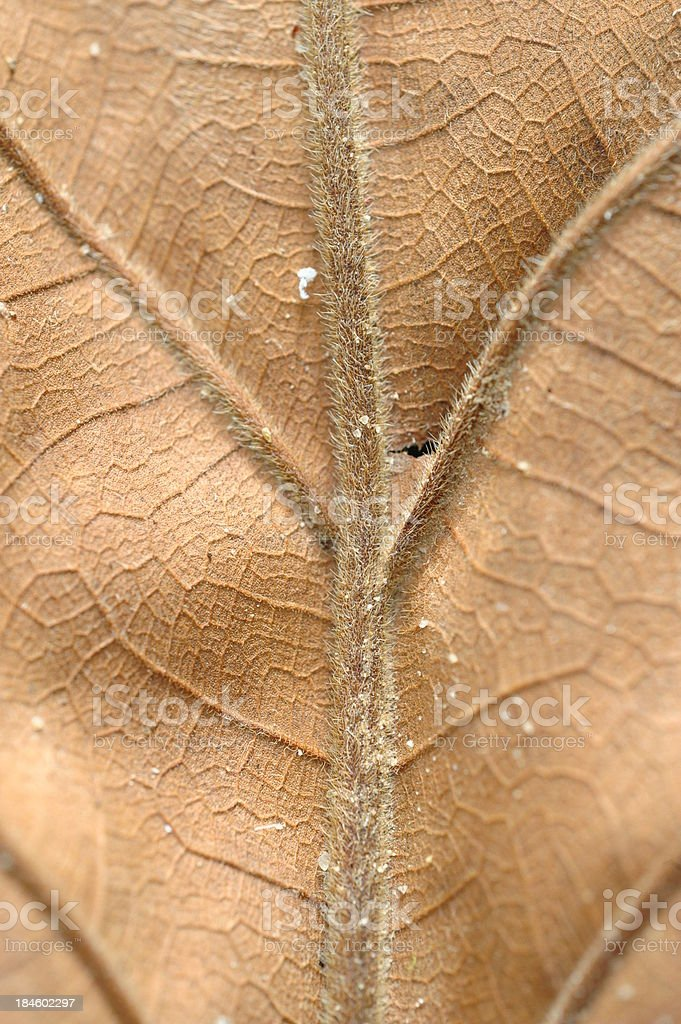 dry leaf on textured paper (vertical) royalty-free stock photo