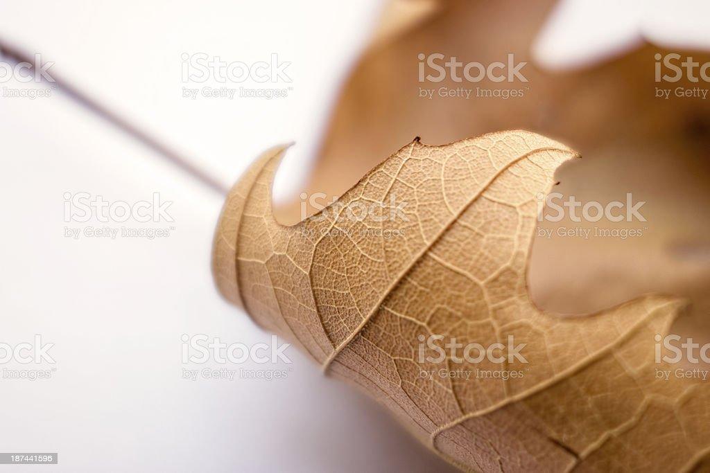 Dry Leaf royalty-free stock photo