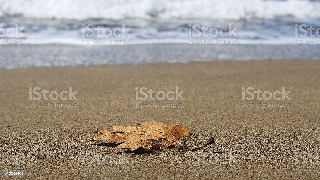 Сухой лист Стоковые фото Стоковая фотография