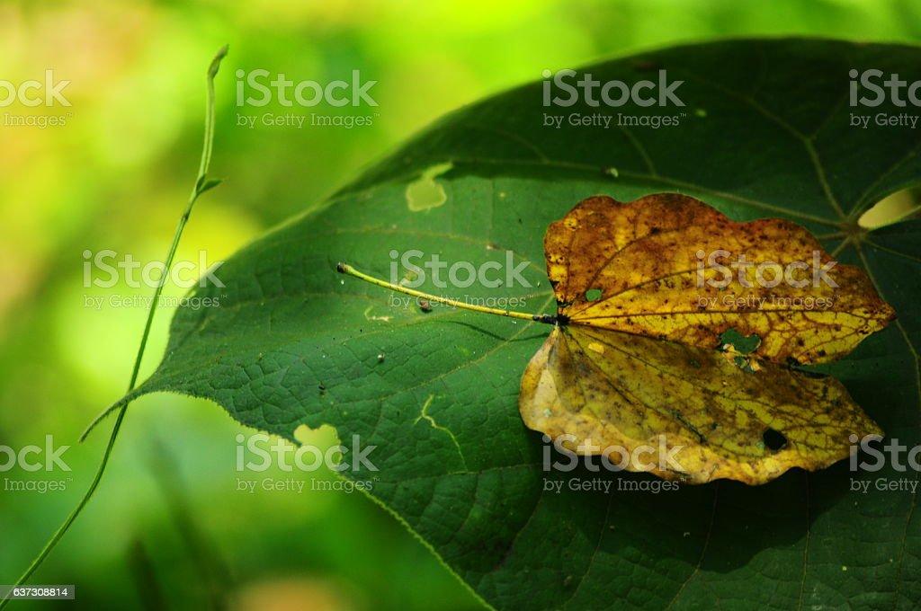 Dry leaf. stock photo