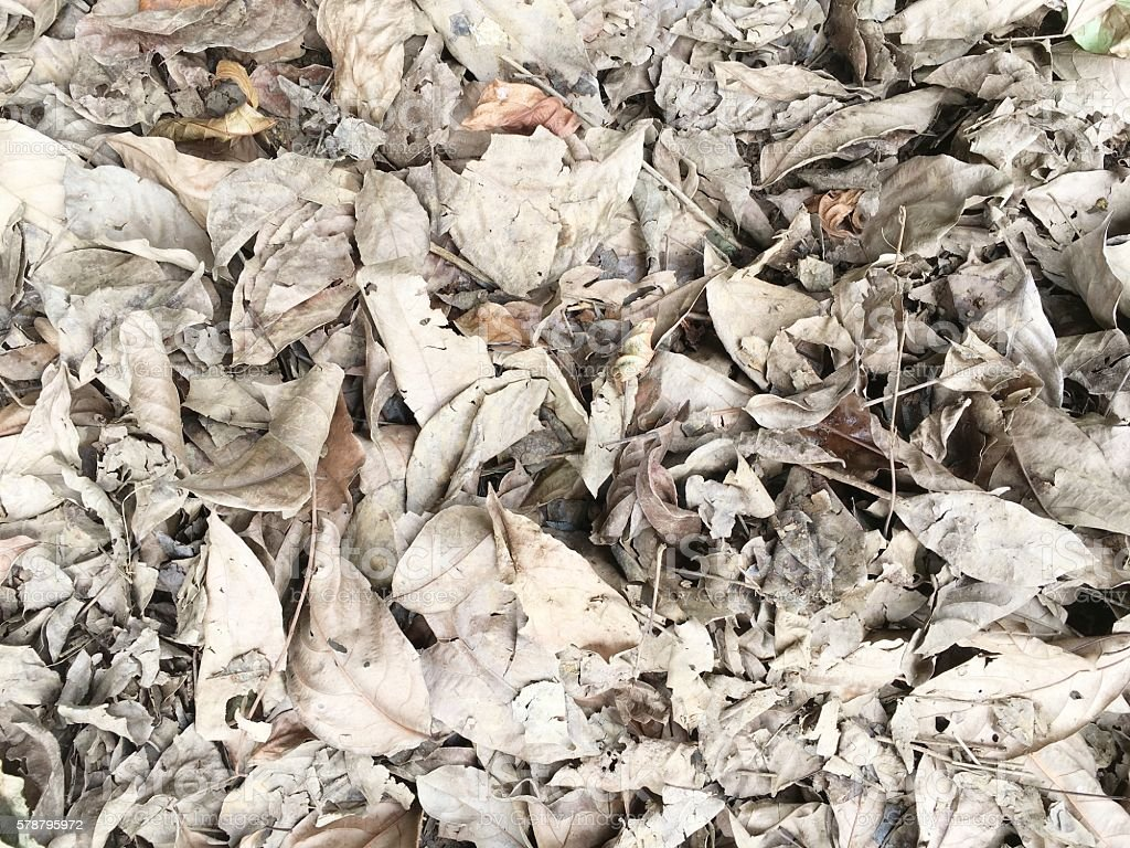 dry leaf pile  background stock photo