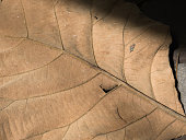 Dry leaf texture for pattern. Background or wall paper