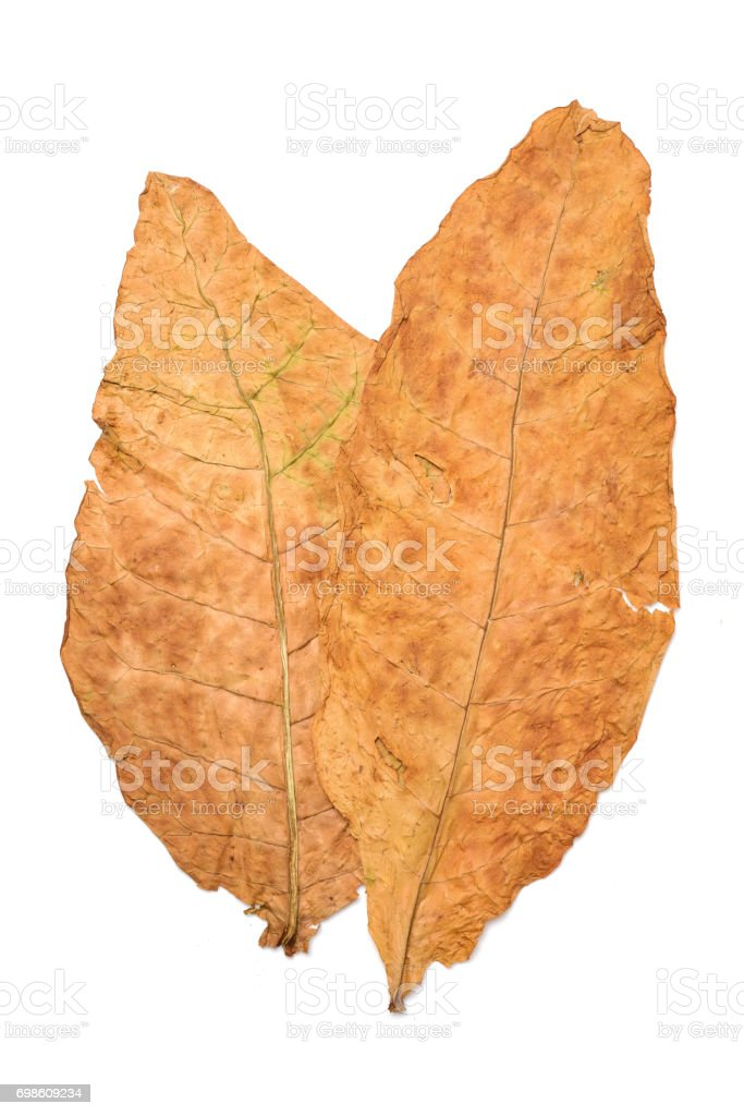 Dry leaf tobacco closeup on the white background stock photo