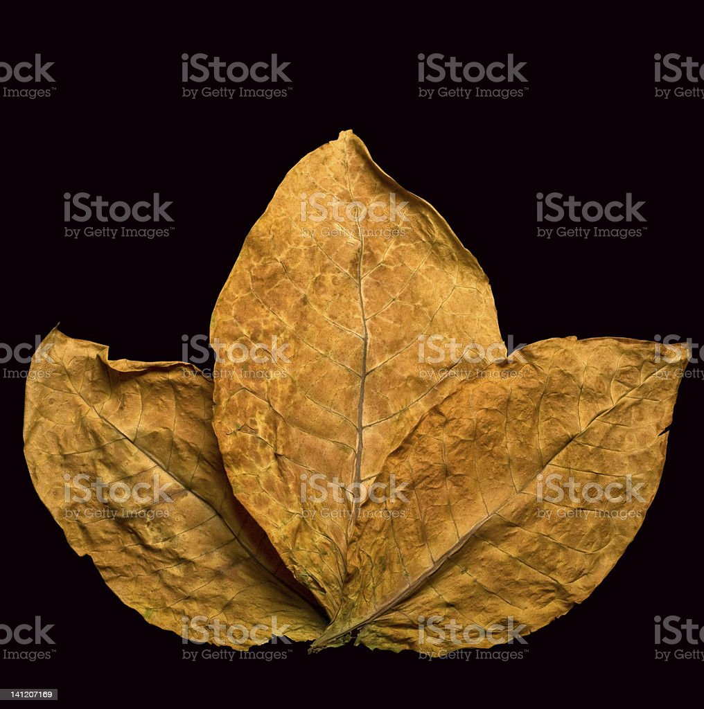 dry leafs royalty-free stock photo