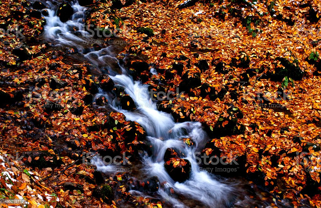 Dry leaves and stream stock photo