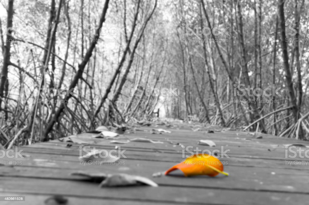 Dry leaves falling on walkway.  focus on orange color royalty-free stock photo