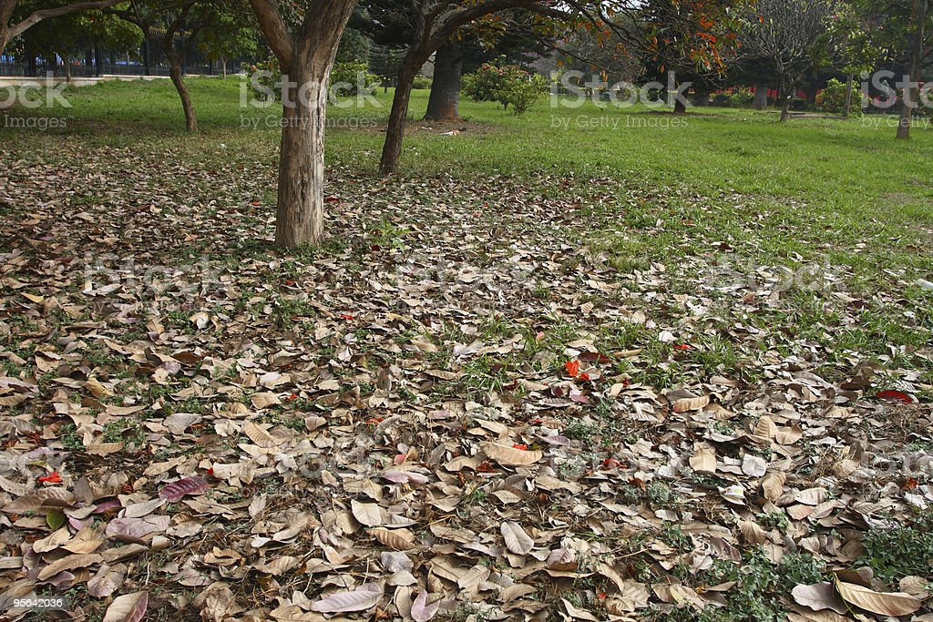 Dry leaves in park stock photo