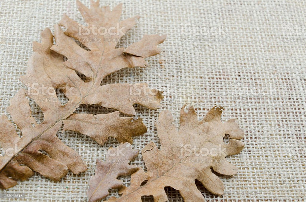 Dry leaves on a vintage table cloth royalty-free stock photo