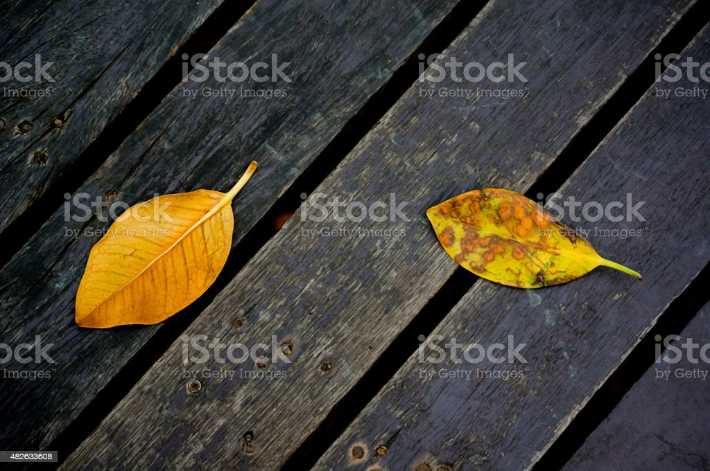 Dry leaves on old planks royalty-free stock photo