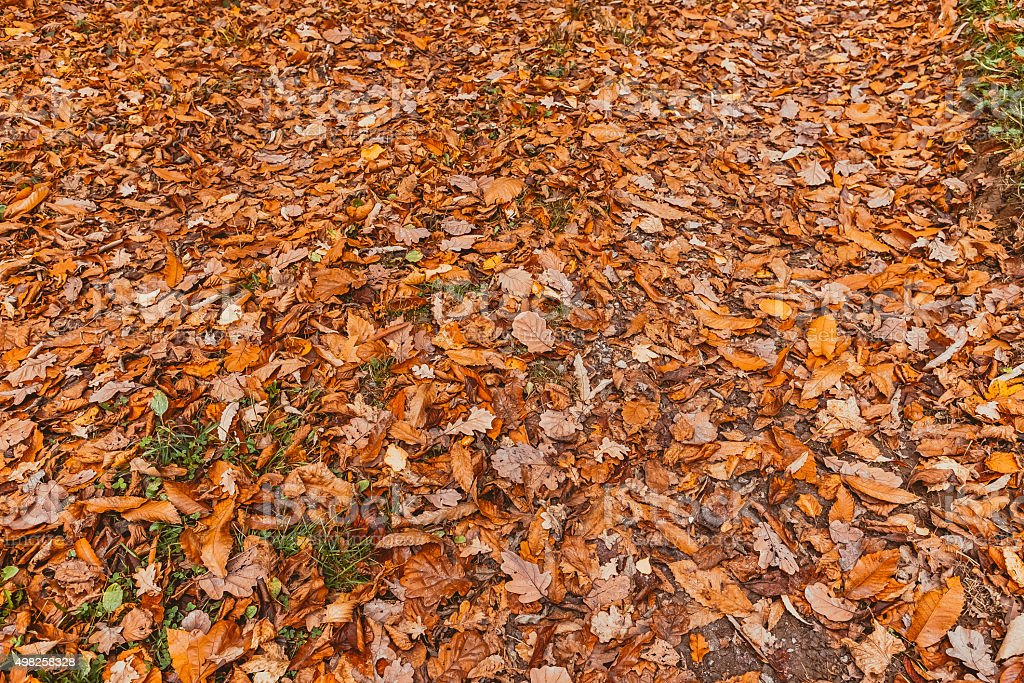 Dry leaves on the ground stock photo