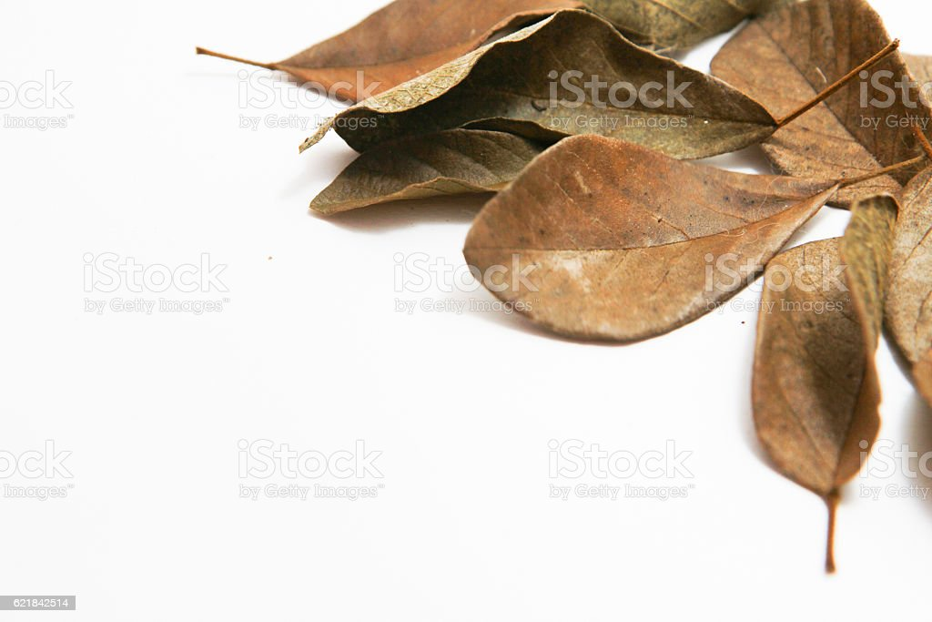 Dry leaves on white background stock photo