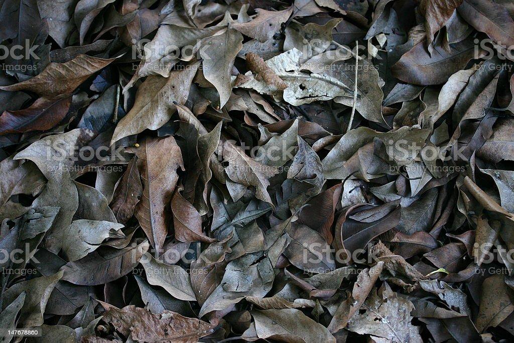 Trockene Blätter Lizenzfreies stock-foto