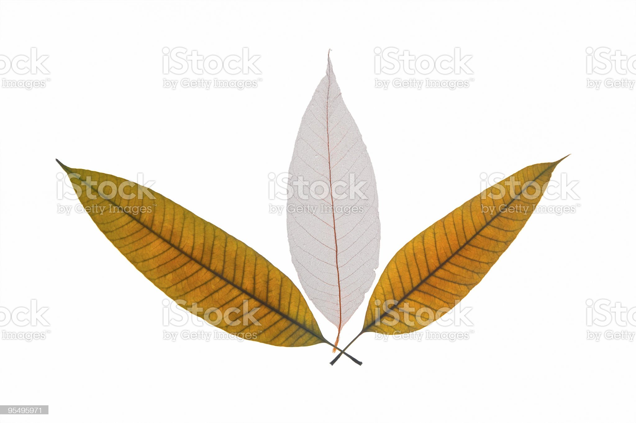 Dry leaves royalty-free stock photo