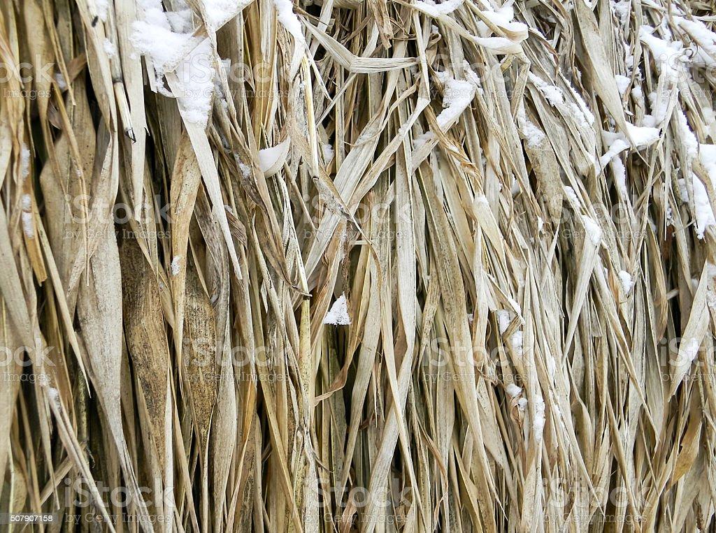 Secar maíz hojas bajo nieve foto de stock libre de derechos