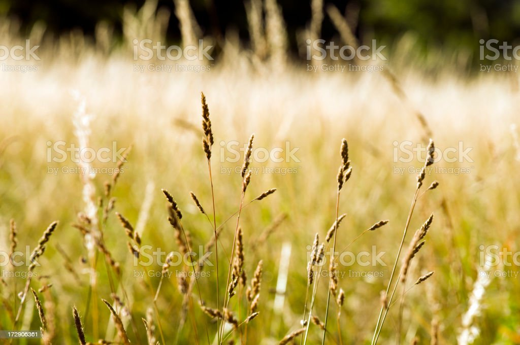 Dry meadow in summer with pollen. stock photo
