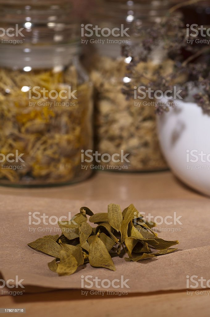 dry mistletoe leaves royalty-free stock photo