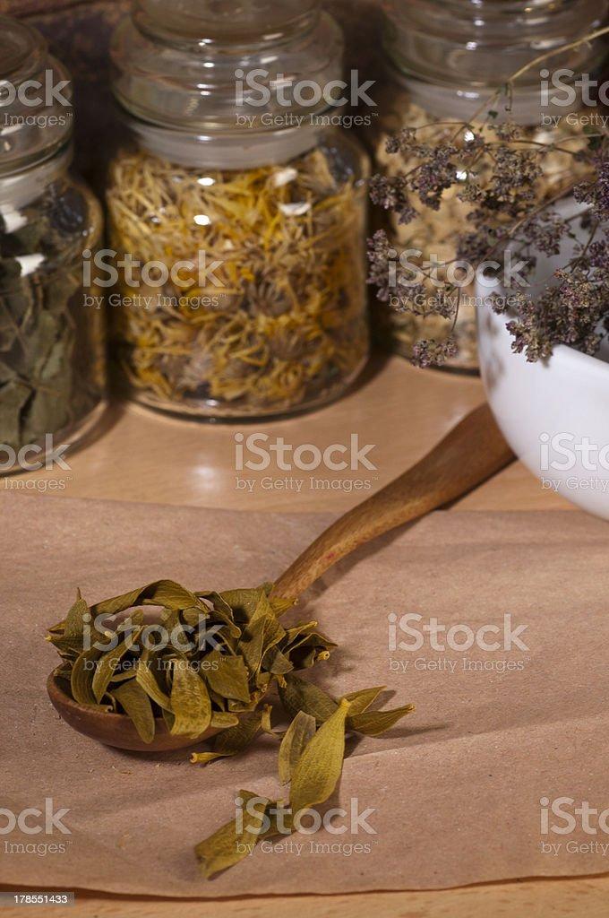 dry mistletoe leaves royalty-free stock photo