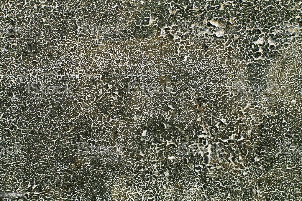 dry moss stock photo