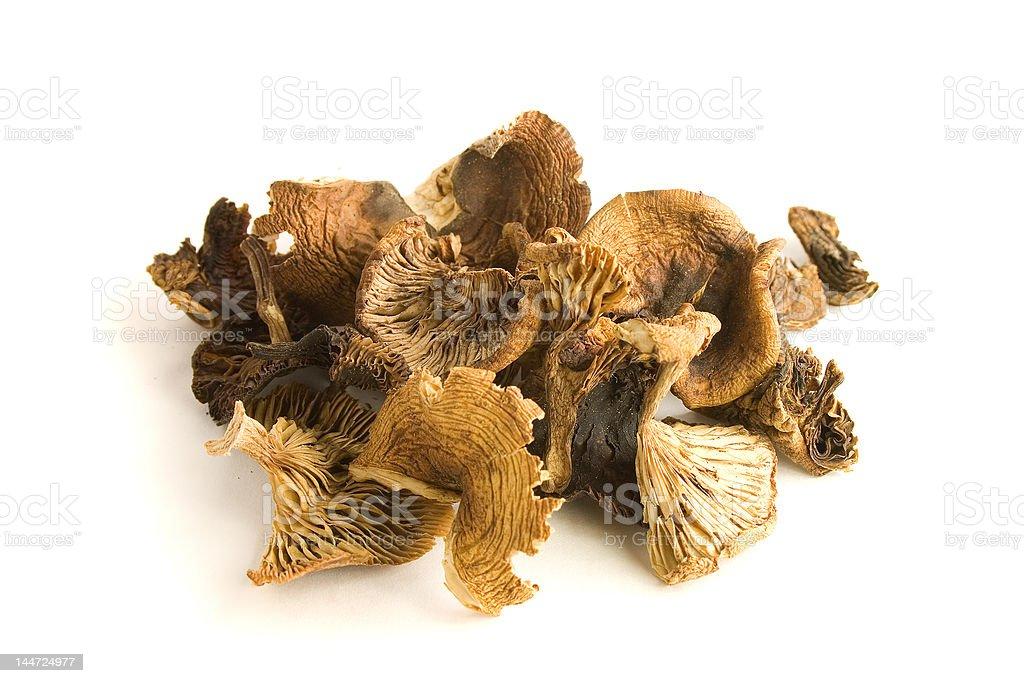 dry mushrooms stock photo