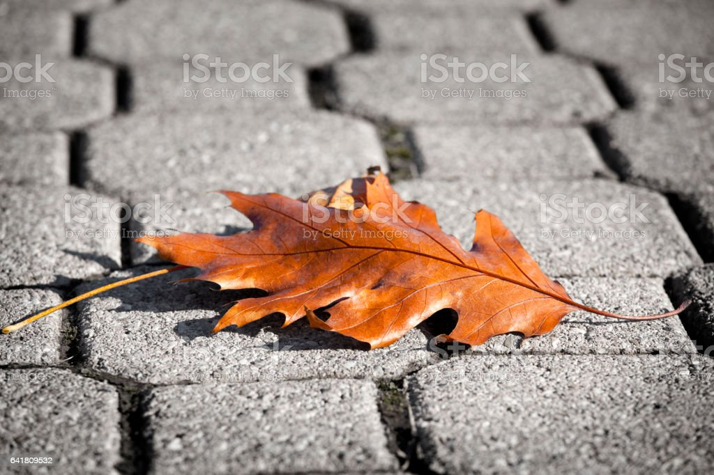 Dry oak feal stock photo