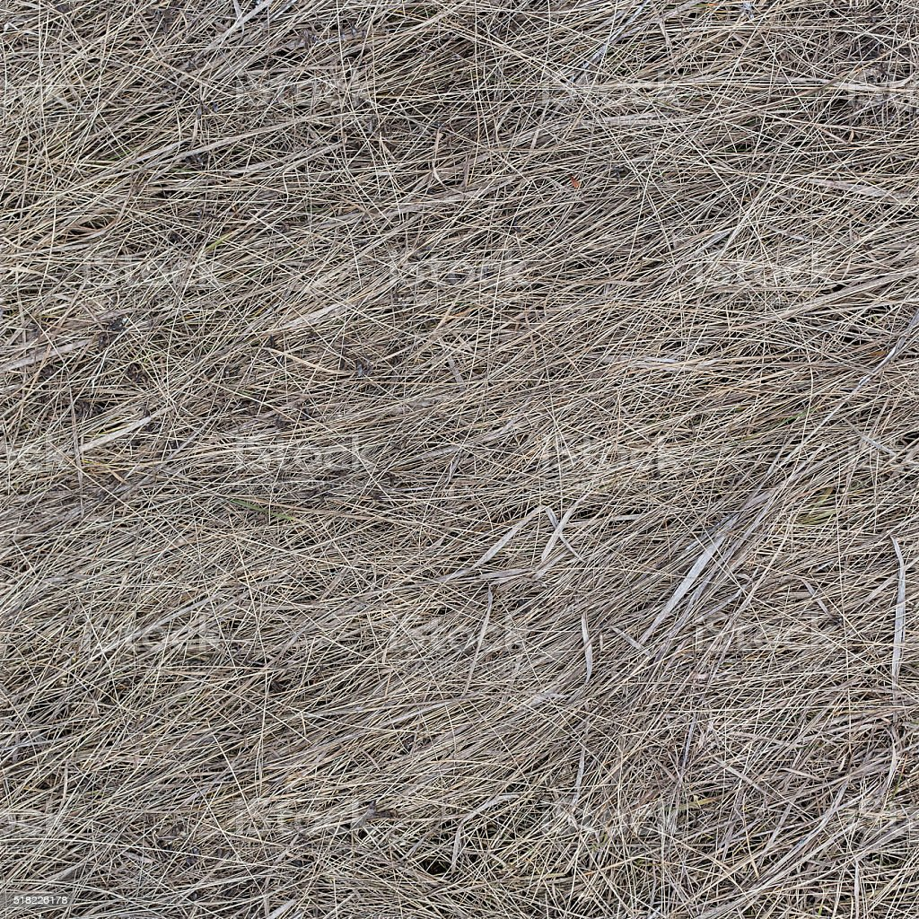 Dry old grass texture seamless background stock photo