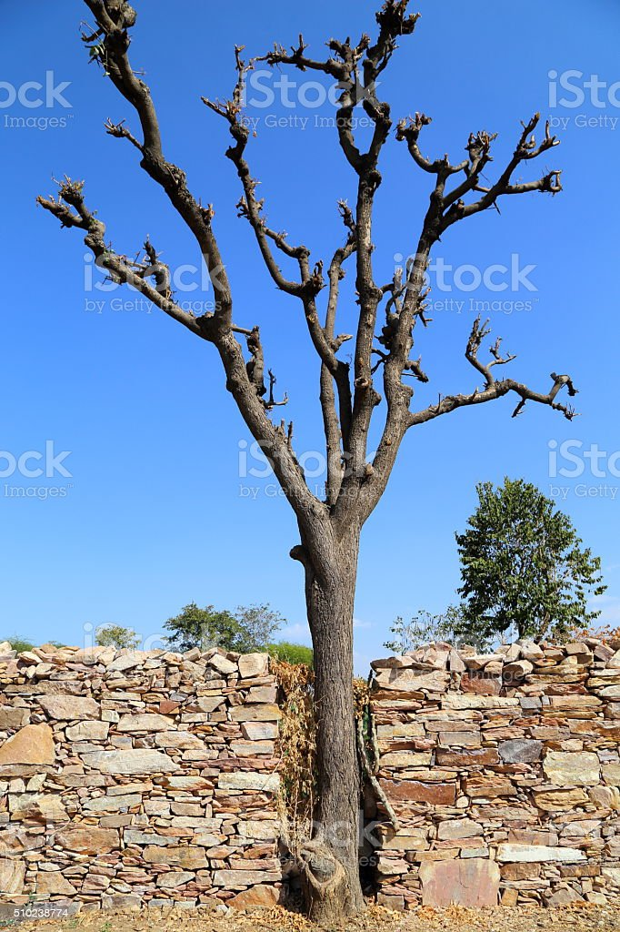Dry or cut tree stock photo