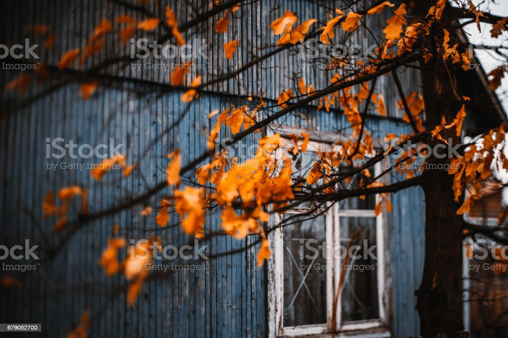 Dry orange oak leaves in front of house stock photo