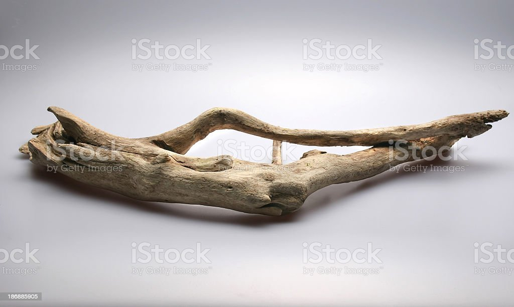 Dry piece of driftwood isolated on white background stock photo