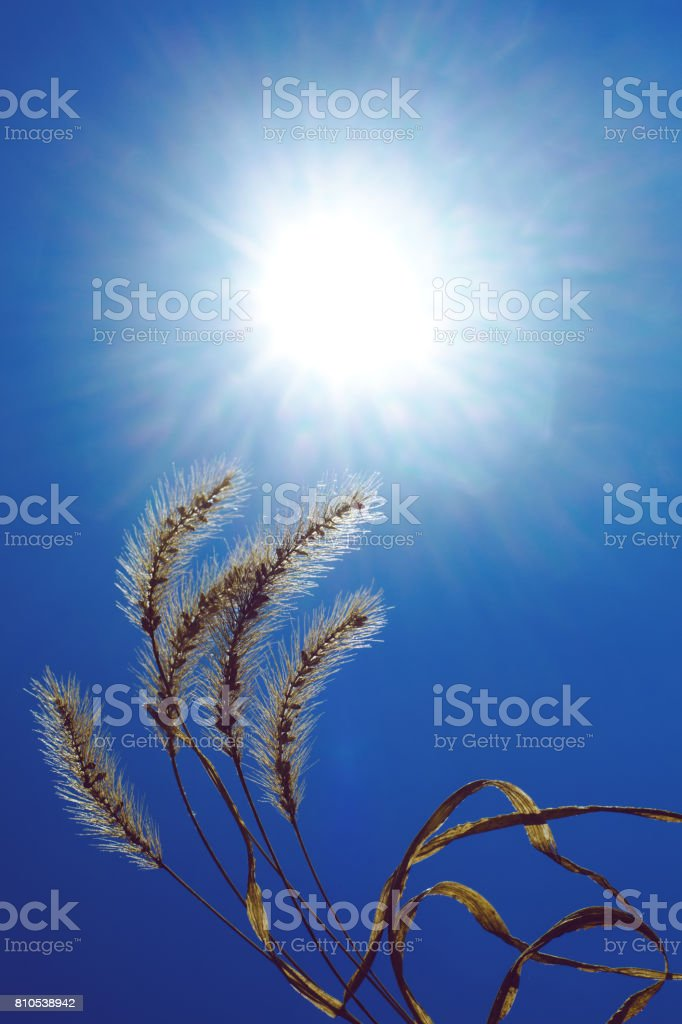 Dry plant against the sky stock photo
