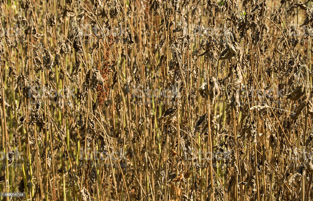 dry plant background stock photo