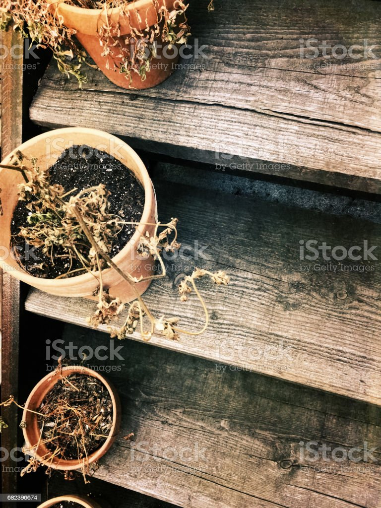 Dry plants in pots on old wooden staircase stock photo