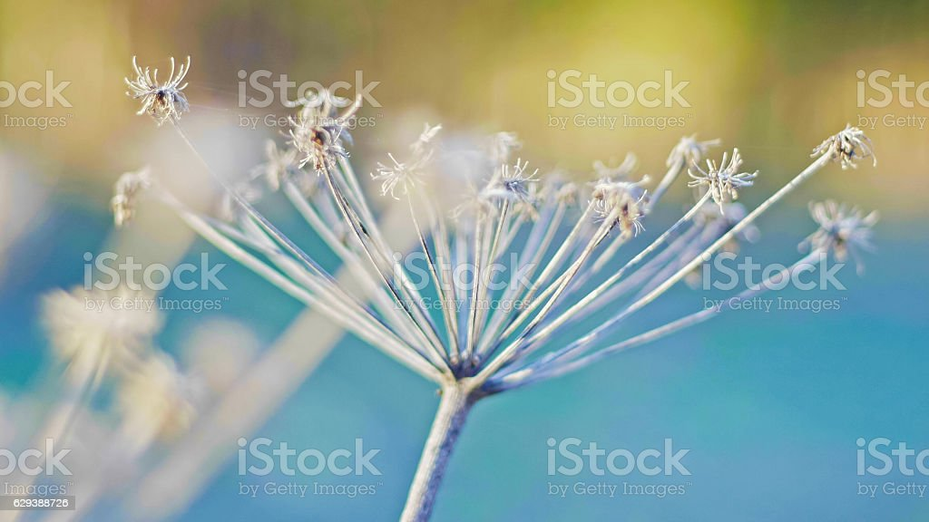 Dry plants in the spring field, close up stock photo