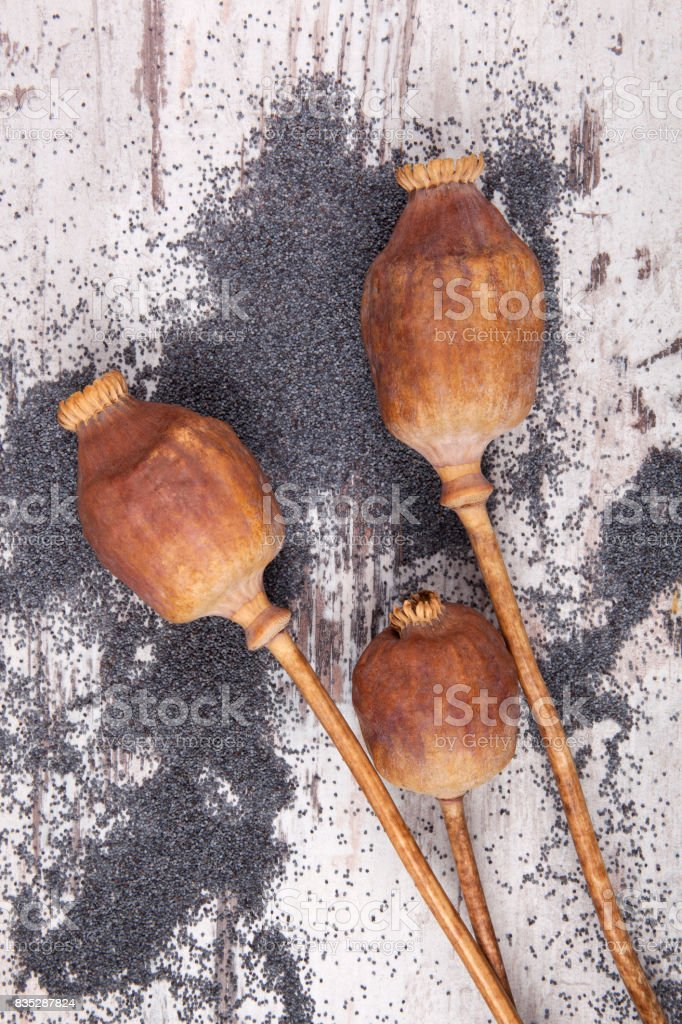 Dry poppy heads on wooden background with bulk stock photo