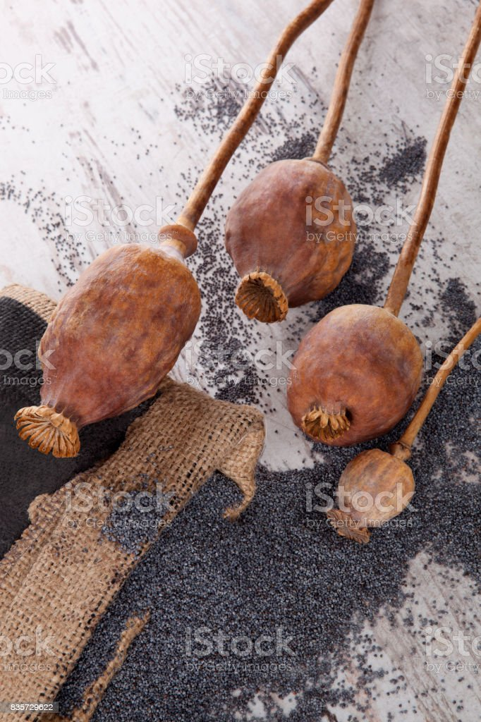 Dry poppy seeds and heads. stock photo
