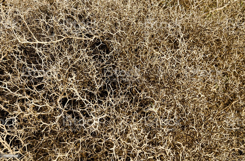 Dry prickly bush background stock photo