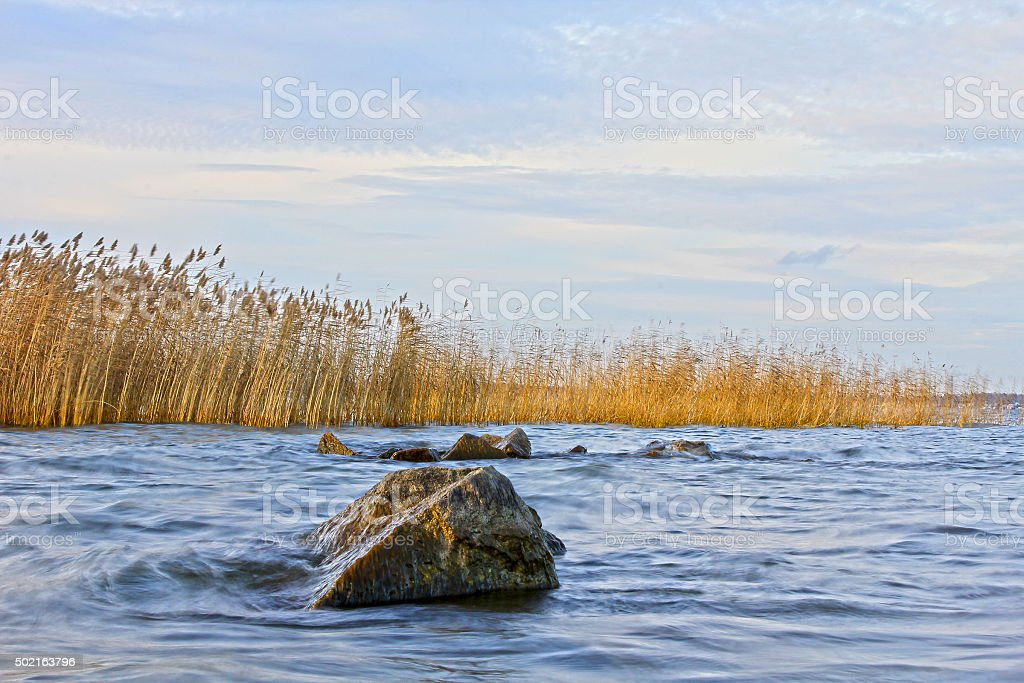 Dry reeds and the waves of the lake stock photo