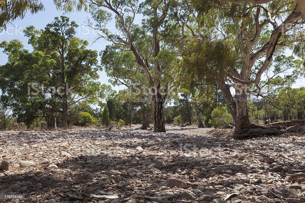Dry River bed. Flinders Ranges (near Iga Warta). South Australia. royalty-free stock photo