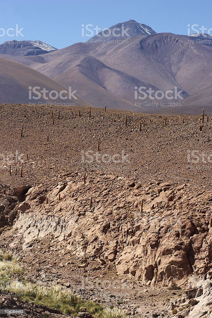 Dry riverbed with cacti, Atacama Desert, Chile royalty-free stock photo