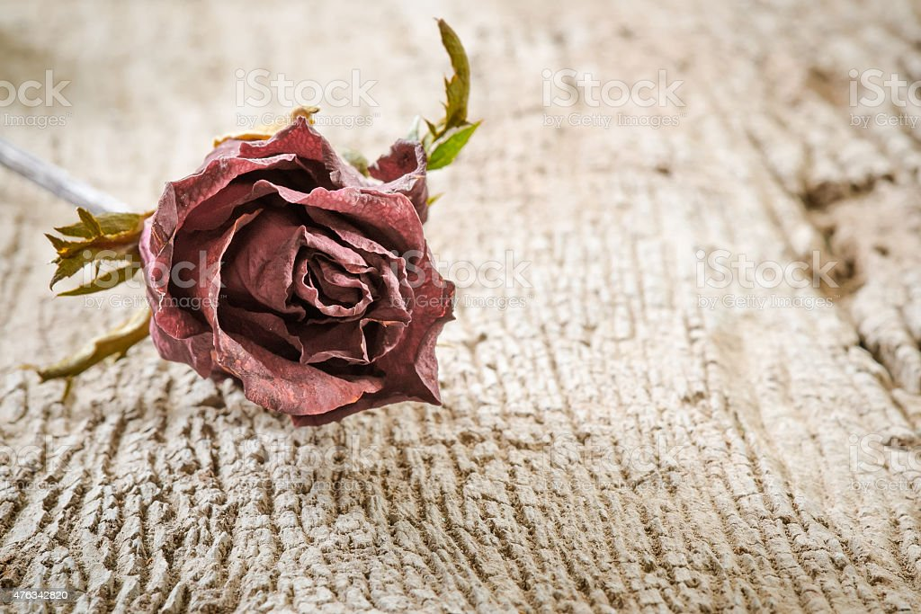 Dry Rose on Wooden Background stock photo