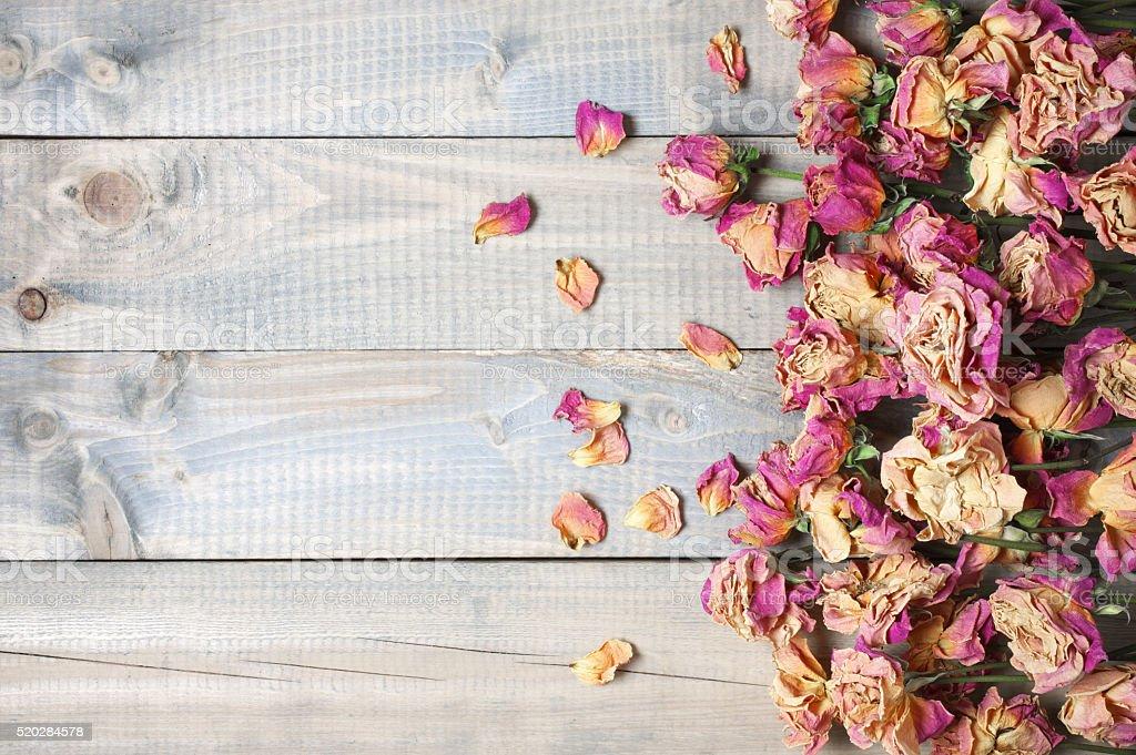 Dry roses background stock photo