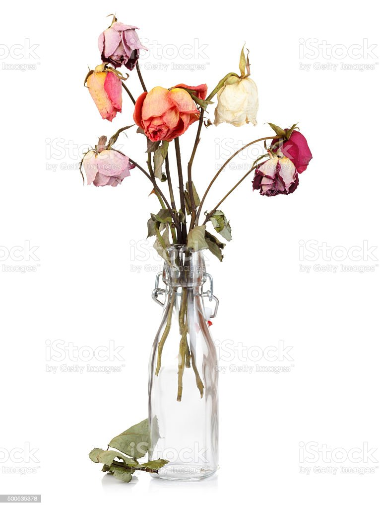 Dry roses in glass bottle stock photo