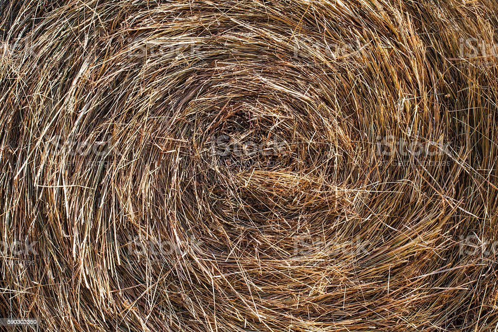 Dry round hay stack natural background, close up stock photo
