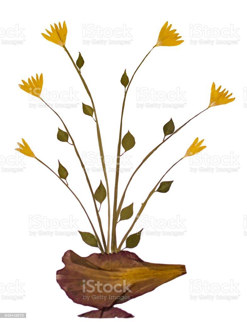 Dry sample flower specimen stock photo
