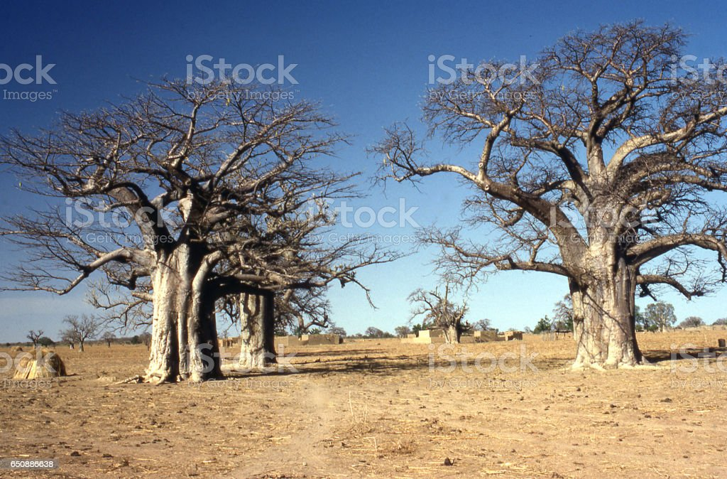 Dry season nomadic herders camping in farmer fields Yatenga Burkina Faso Africa stock photo
