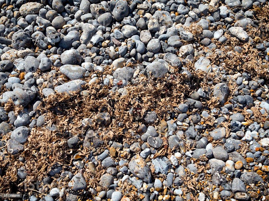 Dry seaweed on a pebble beach stock photo