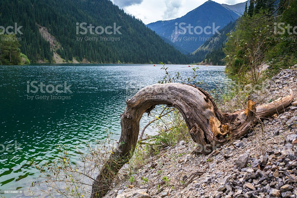 dry snag on the shore of a mountain lake stock photo