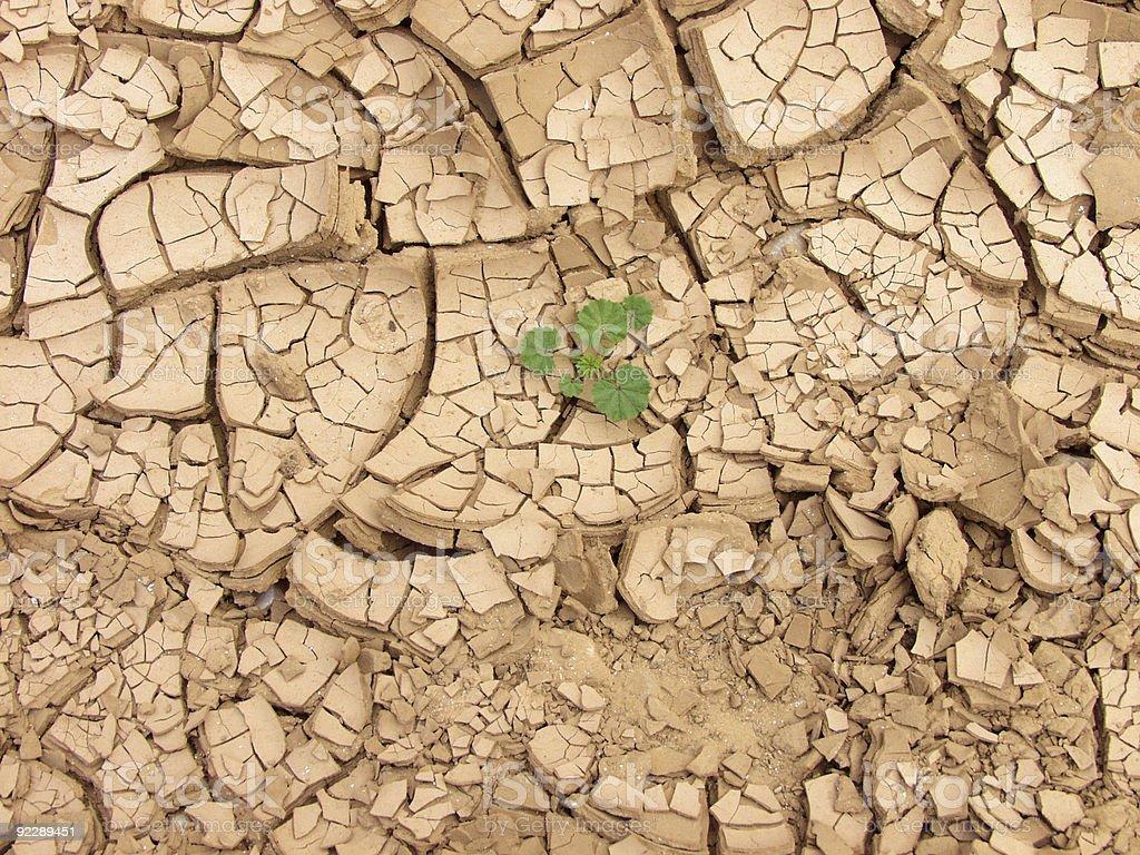 Dry soil in Judean desert royalty-free stock photo