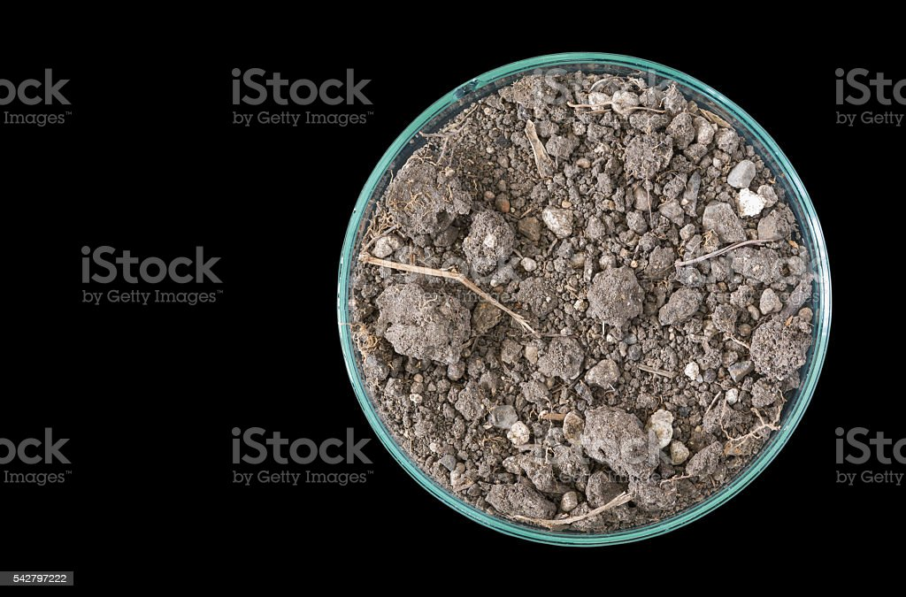 Dry soil in petri dish isolated on black background stock photo