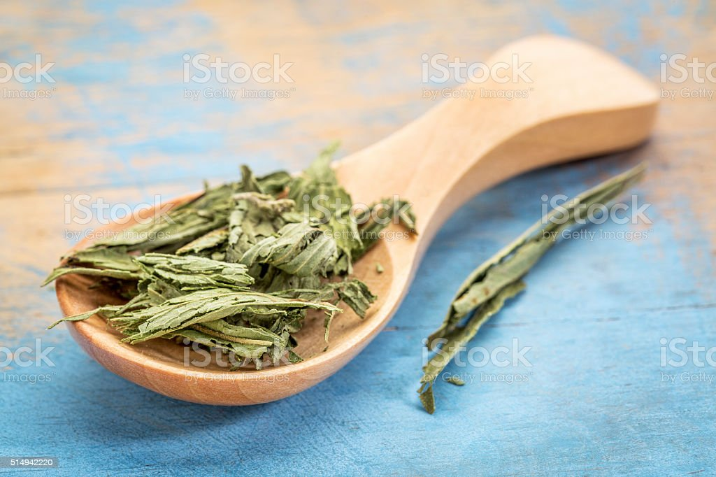 dry stevia leaf on a wooden sppon stock photo
